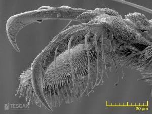Detail of a soil mite